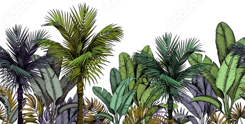 plakat Seamless border with green tropical palm trees on white background. Hand drawn vector illustration.