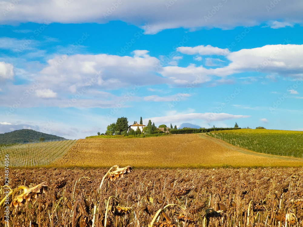 Autumn in Tuscany - Field of dried sunflowers. .