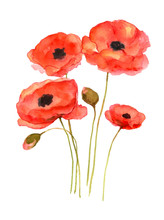 Red Poppy Art, Watercolor Pain...