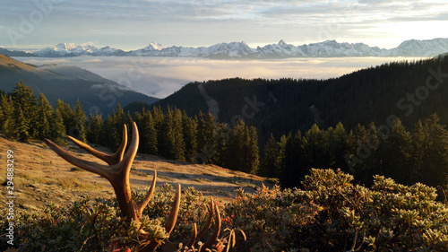 Photo beautiful sunny morning on the mountains with antlers in the foreground