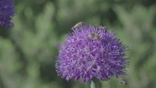 Bee Flying Super Slow Motion_2...