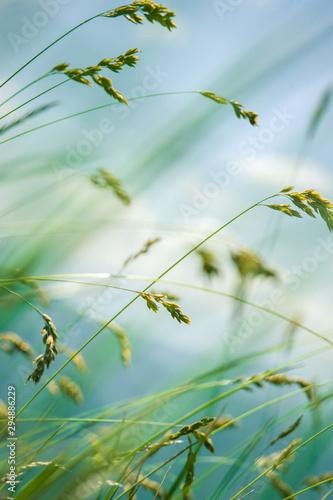 wiatr-wiejacy-przez-kwiat-trawy