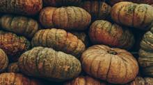 Group Of Pumpkins Pale Gloomy ...