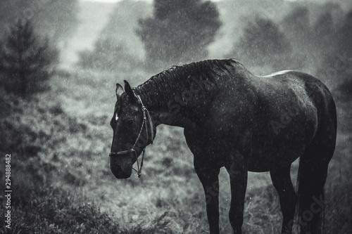 Foto op Canvas Paarden Pferd im Regen