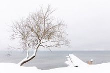 Snow Covered Tree By Lake