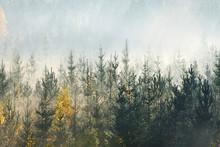 Sunlight Over Forest