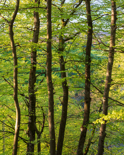 Trees in forest in Soderasen National Park, Sweden - 294893801