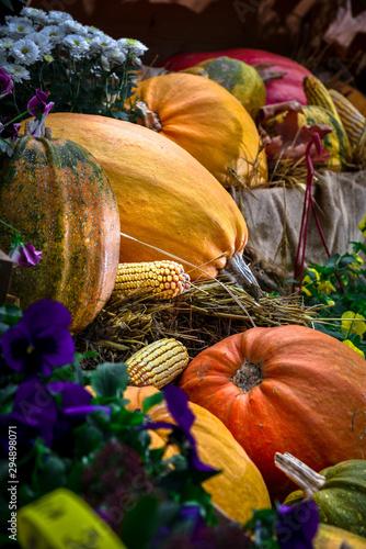 pumpkins and gourds Fototapet