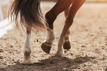 The Hooves Of A Sorrel Horse W...