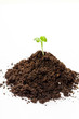 Heap soil with a green plant sprout on white background (Flip 2019)