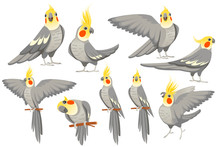 Set Of Adult Parrot Of Normal ...