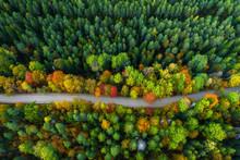 Latvian Autumn Nature. Forest ...