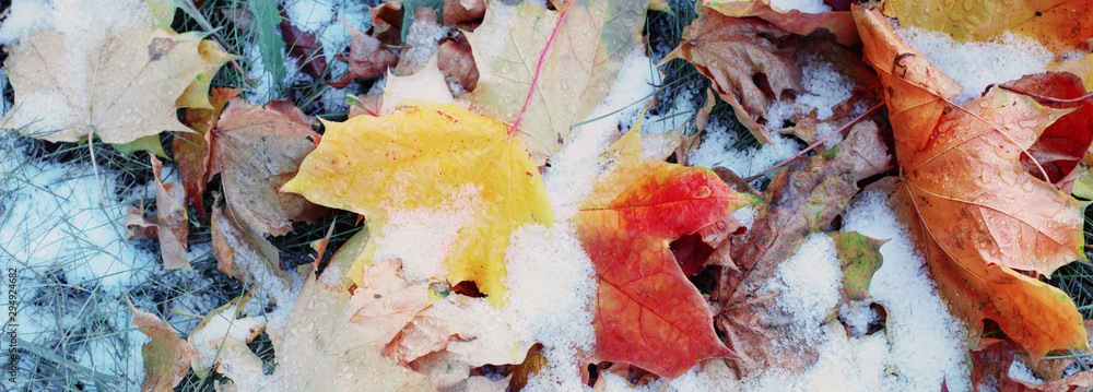 Fototapety, obrazy: background of yellow autumn leaves in snow