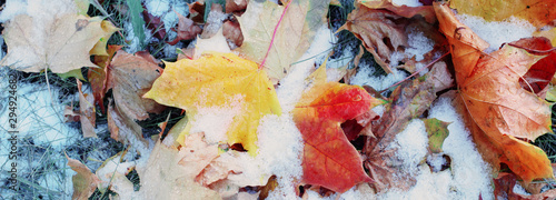 Fotobehang Bomen background of yellow autumn leaves in snow
