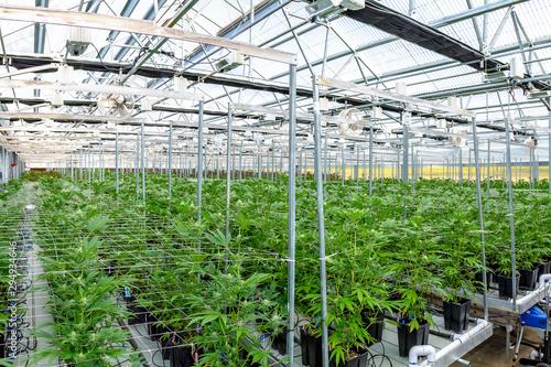 Photo Marijuana Farm in Oregon