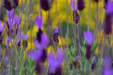 Pretty Purple Flowers On Yellow Background