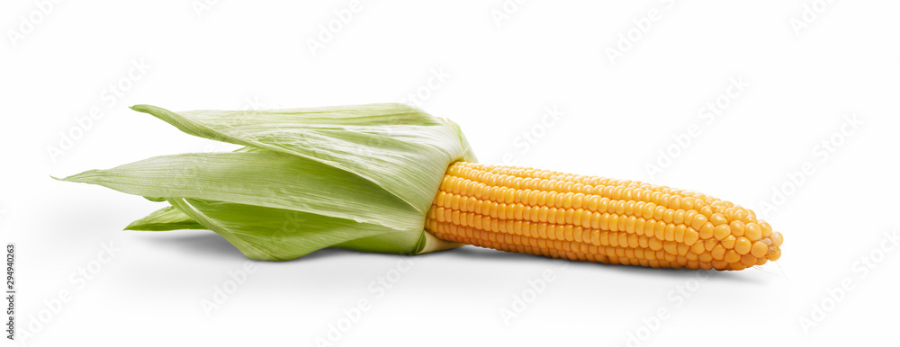 Fototapety, obrazy: Golden ripe open corn on the cob, corncob, isolated against a white background.