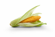 Golden Ripe Open Corn On The Cob, Corncob, Isolated Against A White Background.