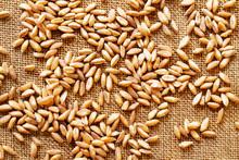 Grains Of Spelt