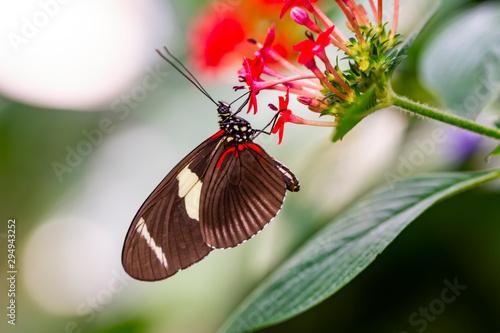 Keuken foto achterwand Vlinder Closeup beautiful butterfly in a summer garden