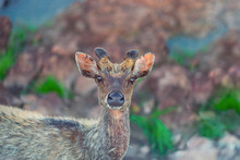 Portrait Of A Deer On A Backgr...