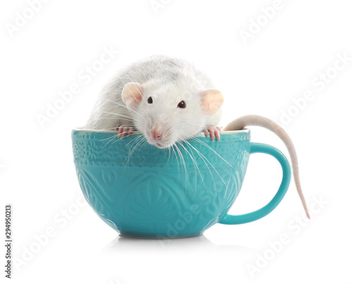 obraz PCV Cute little rat in cup on white background