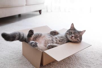 Slatka siva tabby mačka u kartonskoj kutiji na podu kod kuće