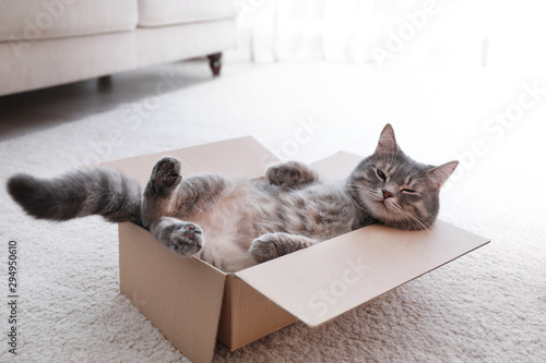 Cute grey tabby cat in cardboard box on floor at home