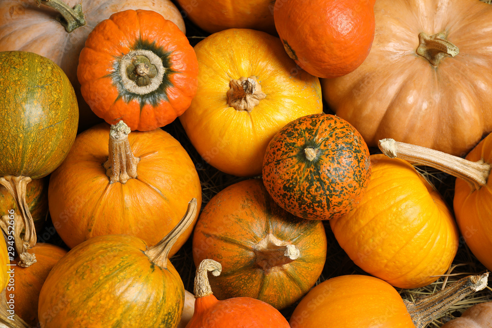 Fototapety, obrazy: Many fresh ripe pumpkins as background, top view. Holiday decoration