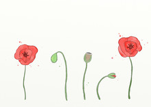 An Illustration Of Red Poppies.
