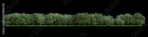 Deurstickers Khaki Forest isolated. Image useful for banners nd poster or photo maipulations. 3d rendering.