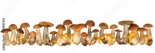Boletus edulis isolated on white background. Close up. Mushroom Fototapet
