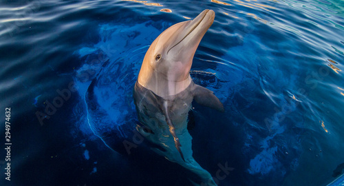 One Dolphin Canvas Print