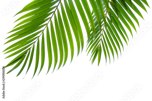 Tuinposter Palm boom tropical coconut leaf isolated on white background, summer background