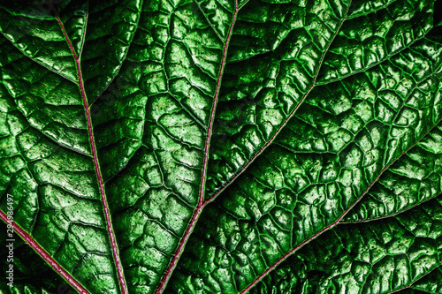 Fotografie, Tablou  abstract green leaves pattern texture, nature background, tropical leaves