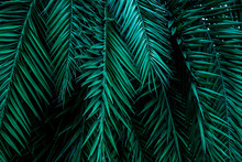 Closeup Tropical Green Palm ...