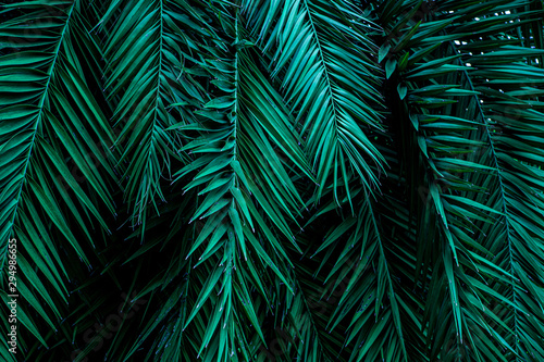 Fototapete - tropical green palm leaf and shadow, abstract natural background, dark tone