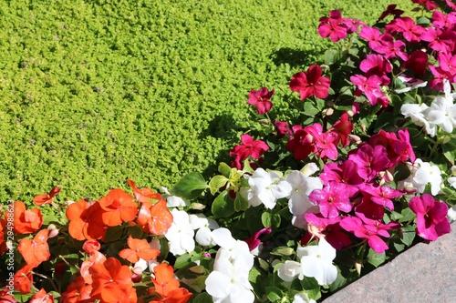garden of flowers, orange, white,pink