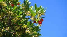Fruits And Bell-shaped White F...