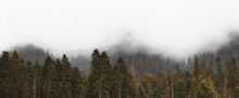Panorama Forested Mountain Slope In Low Lying Cloud With The Evergreen Conifers With Telecabin Passing Shrouded In Mist In A Scenic Landscape View