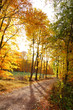 canvas print picture - Waldweg im Herbst mit farbigen Laubbäumen
