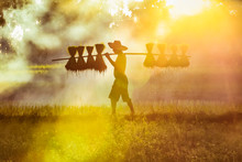 Silhouette Of Asian Farmer Bea...