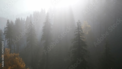 Poster Taupe 8K Forest in Autumn Morning Mist