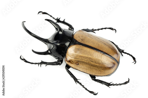 Poster Neushoorn Stag beetle isolated on white background.