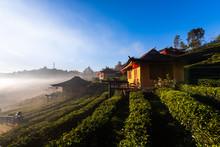 Home Town In Tea Fields With Fog In The Moring. Ban Rak Thai Village, Mae Hong Son, Thailand.
