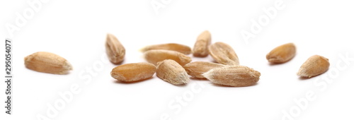 Tuinposter Macrofotografie Spelt grains, kernels isolated on white background, macro