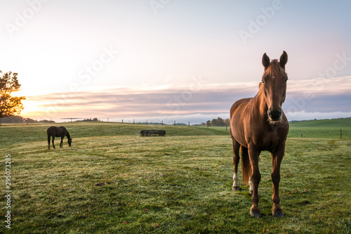 Obraz na plátne Horses grazing in pasture on a cold morning at sunrise beautiful peaceful landsc