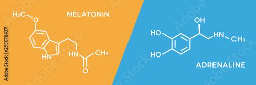 Melatonin and adrenaline hormone symbols Wallpaper Mural