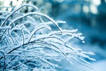 Fairytale Fluffy Snow-covered ...