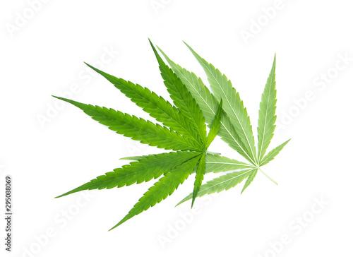 Green cannabis sativa Wallpaper Mural